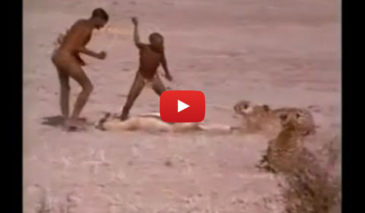 Stealing Food From Cheetah ! The battle for survival ...
