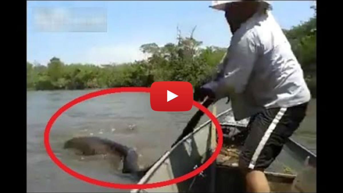 Biggest Anaconda Ever Found