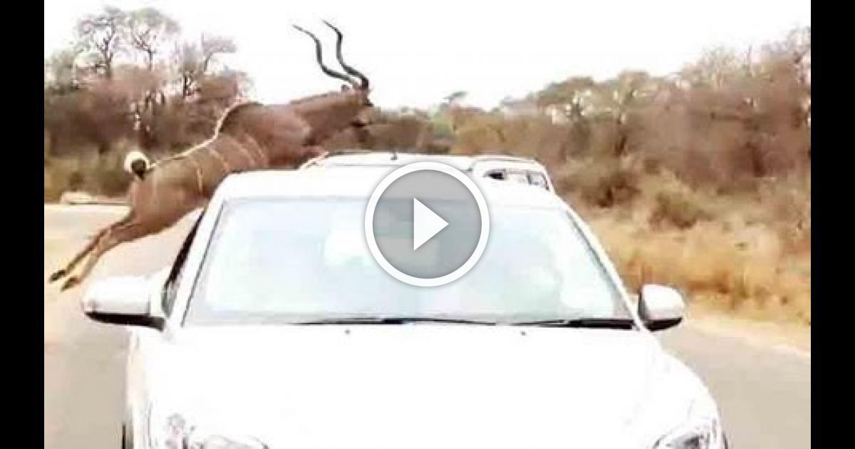 Download Youtube Videos In Safari Lion